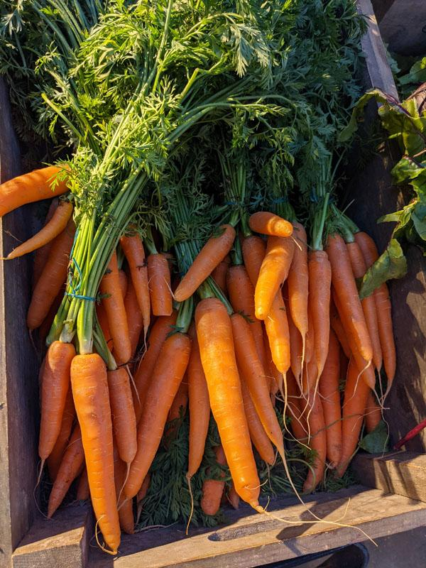 Bunched Carrots