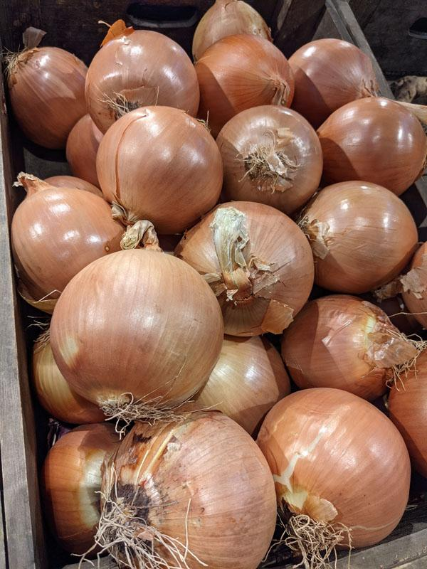White Onions - Large, per 500g