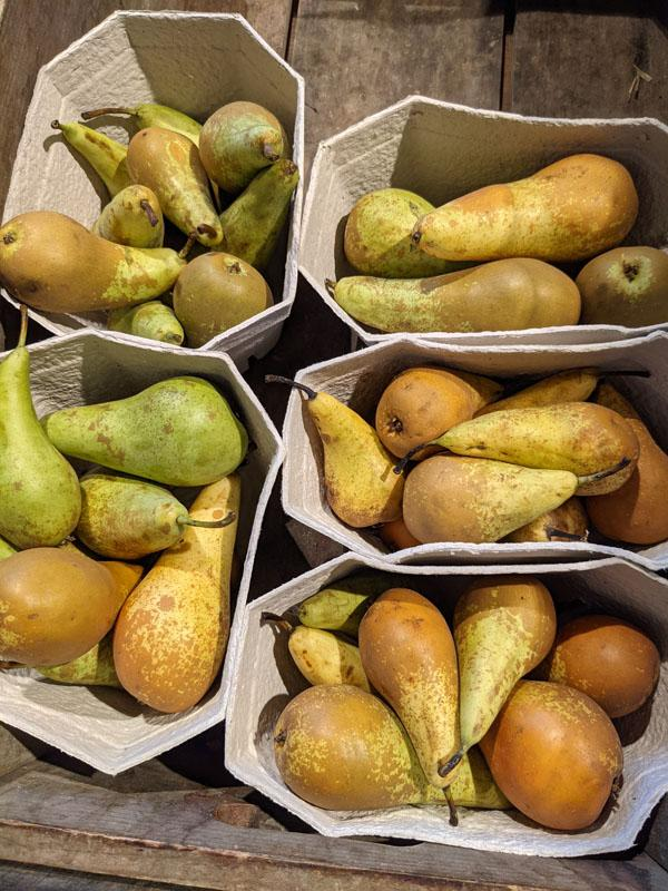 Conference Pears Punnet