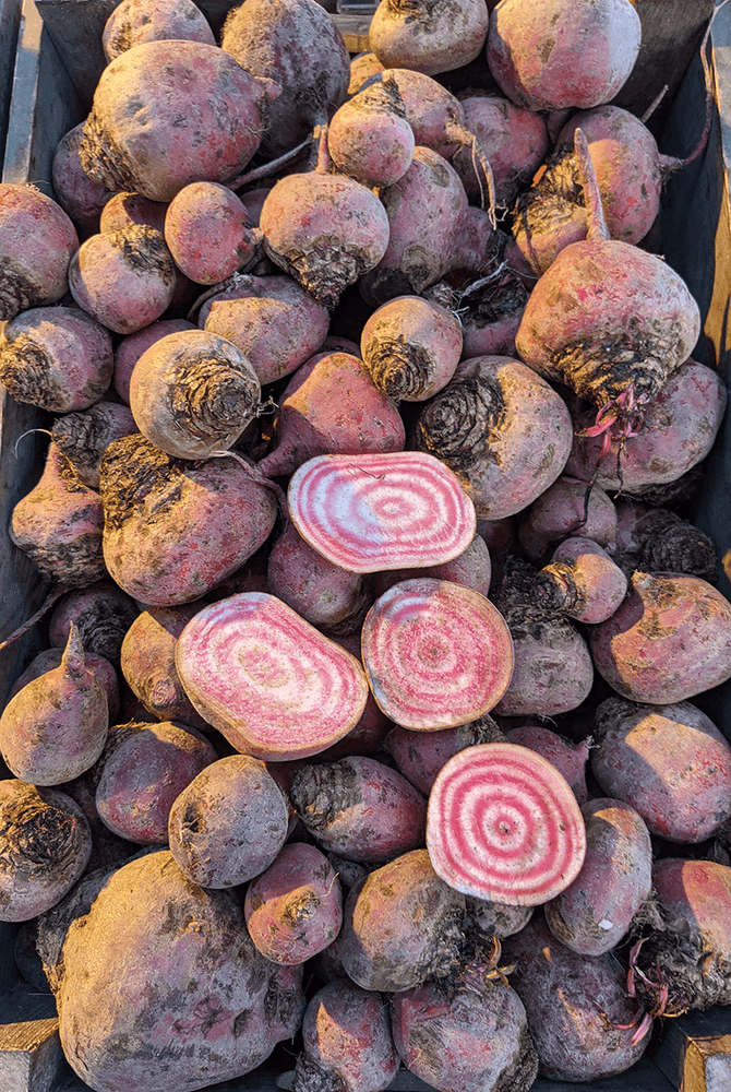 Candy Beetroot, per 500g
