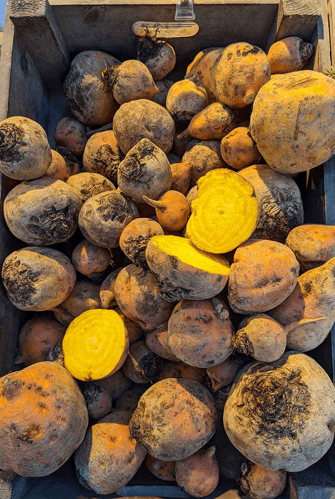 Golden Beetroot, per 500g