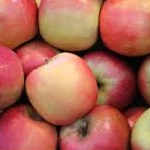 Pink Lady Apple - Each