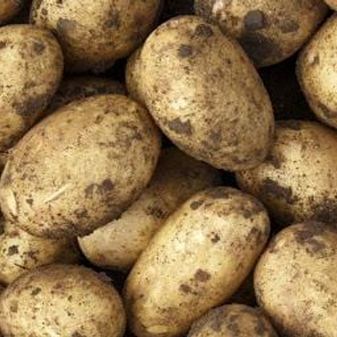 Lincolnshire New Potatoes