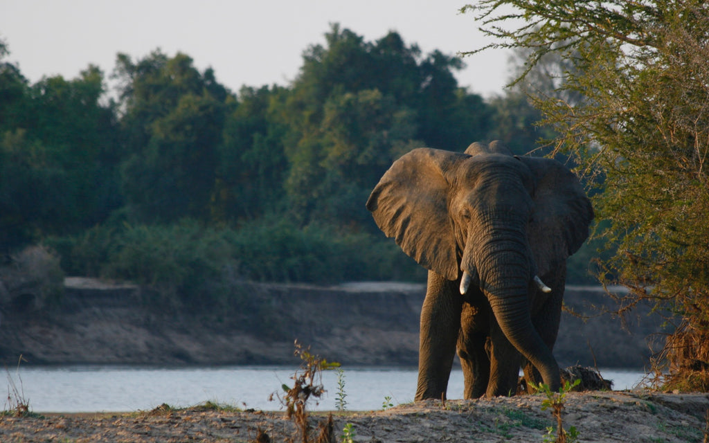 Come visit us if you are visiting the South Luangwa National Park!
