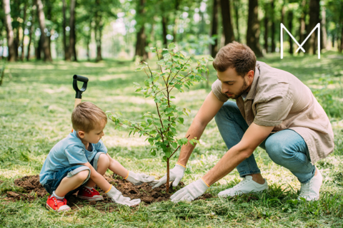 8 Tips this Father's Day : Plant a tree