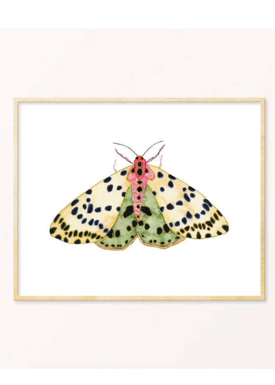 Snoogs & Wilde Art | Moth #7 Art Print