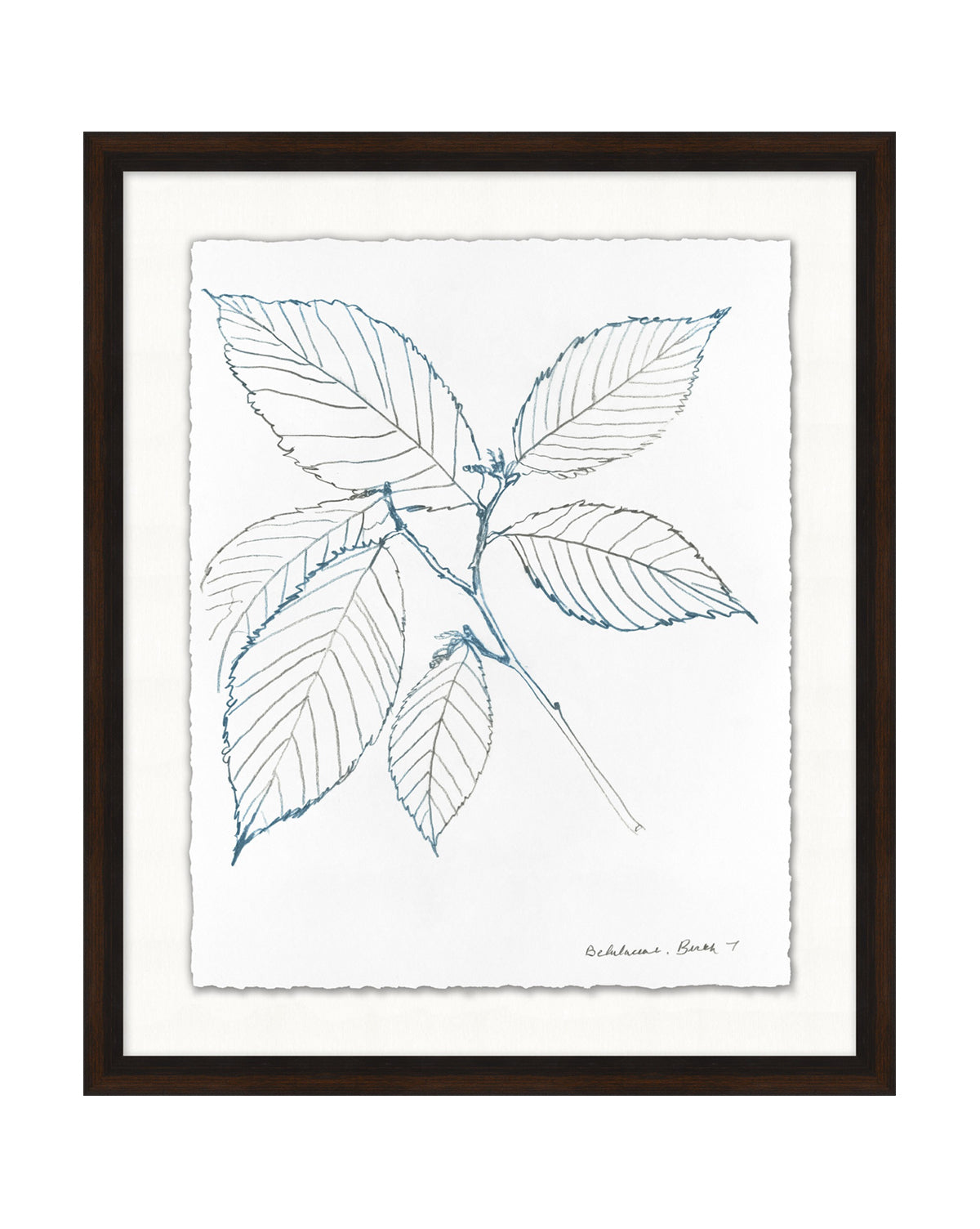 Blue Leaf Sketch 2