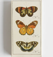 Butterfly Matchbox