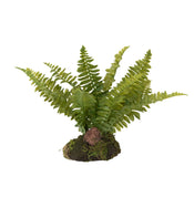 Faux Boston Fern Drop-In