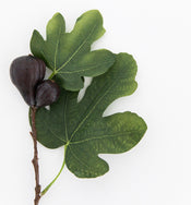 Faux Fig Berry Stem