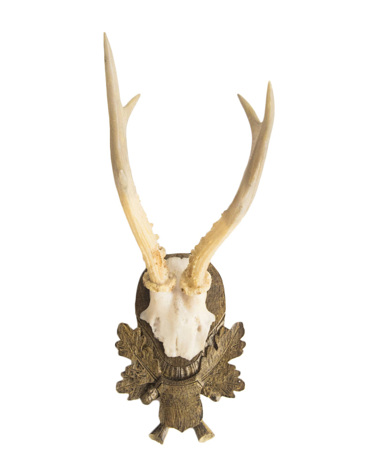 Mounted Antler Trophies