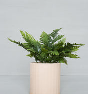 Faux Lady Fern Drop-In