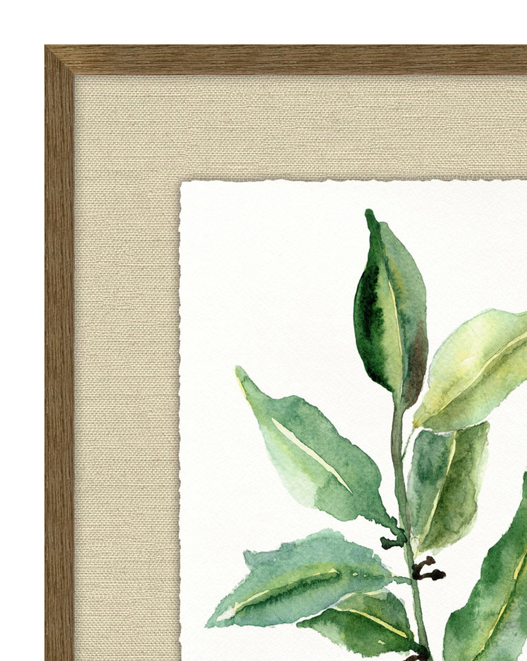 Watercolor Herb 2