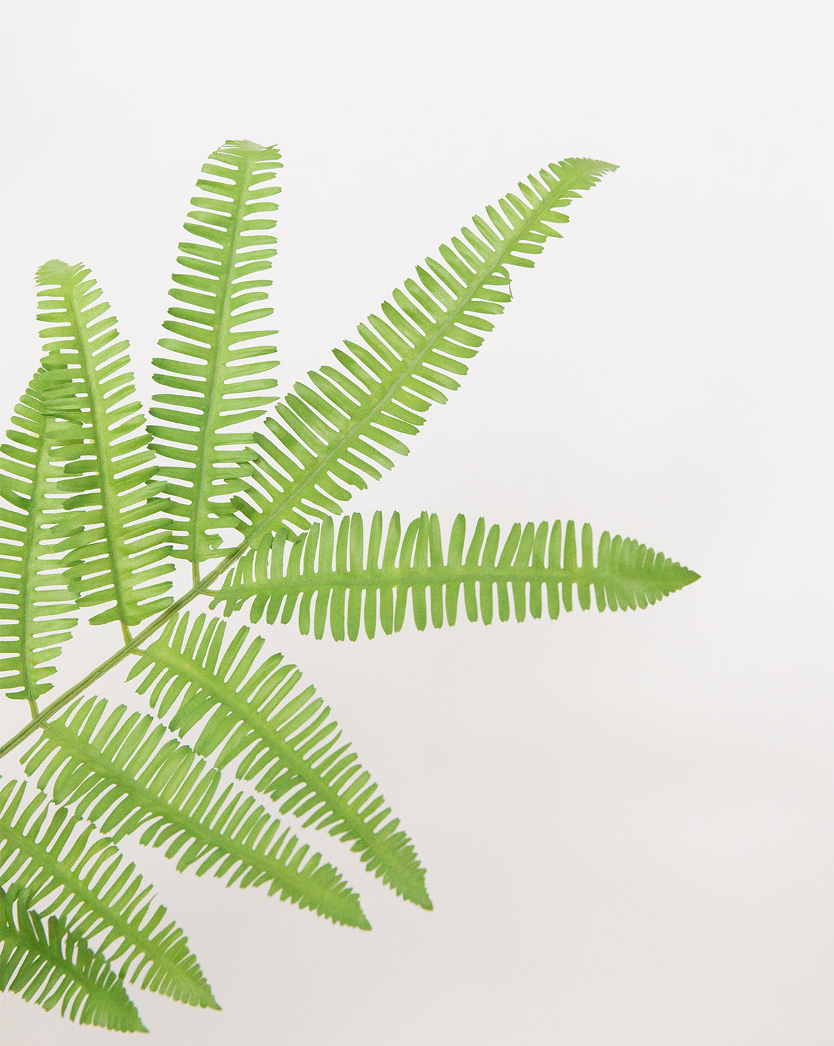 Faux Forest Fern Drop-In
