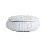 Urchin Porcelain Box in White