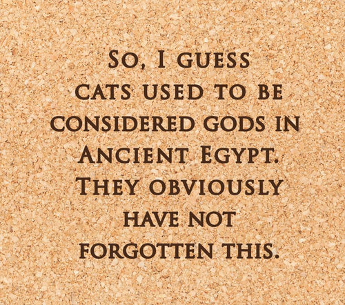 so, I guess cats used to be considered gods in ancient egypt. they obviously have not forgotten this.