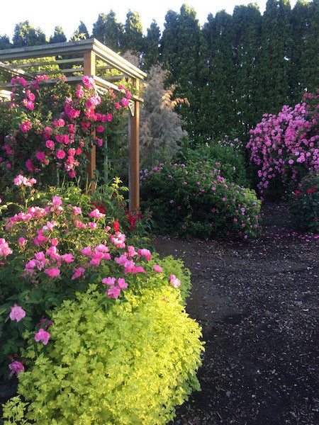 Northland Rosarium owner found inspiration abroad for her gardens