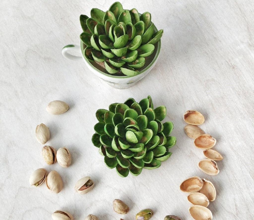 Pistachio Shell Succulent Craft - Created & Written by Sue at Reaching Happy