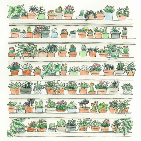 RR29 Plant Wall (6 pack)