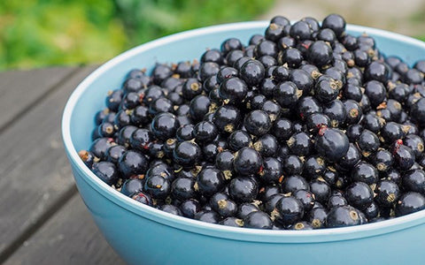 Blackcurrant found to boost performance - 220 Triathlon