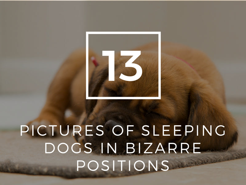 13 Pictures of Sleeping Dogs in Bizarre Positions