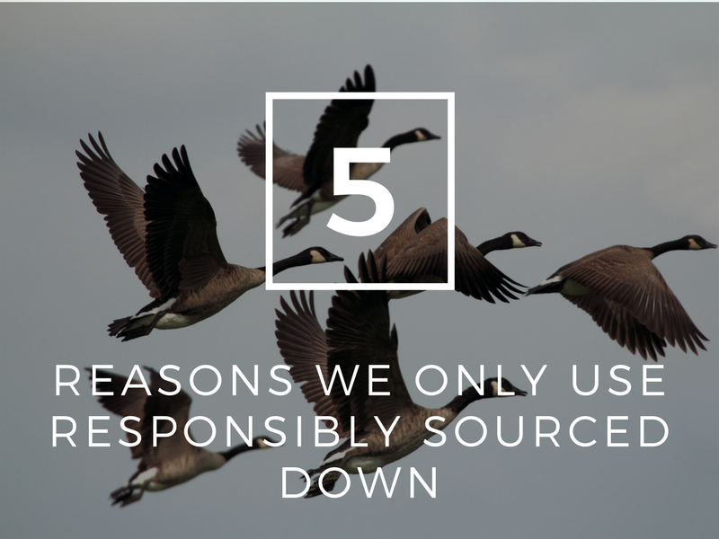 5 reasons we only use Responsibly Sourced Down (RDS)