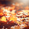 photo of leaves by Timothy Eberly, Unsplash