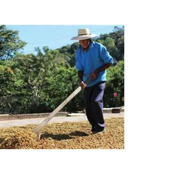 "Klatch Coffee - El Salvador: LM ""El Rubi"" Honey [Varietal & Estate] - The Concentrated Cup"