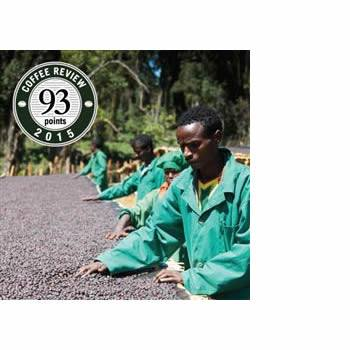 Klatch Coffee - Ethiopian Natural Hambela [Organic] - The Concentrated Cup