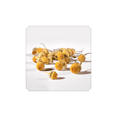 "NUMI Chamomile Lemon Loose Leaf (Herbal Tisane/ ""Teasan"") - The Concentrated Cup"