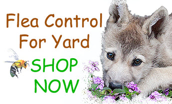 Natural Flea Control For Yard