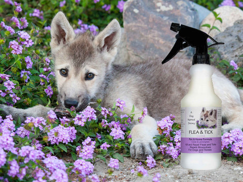 a dog named snowy flea and tick spray