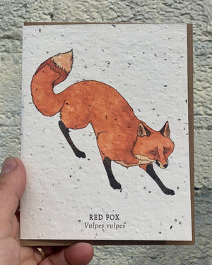 "Fox Animal Greeting Cards - Plantable Seed Paper. These greeting cards feature pen and watercolor drawings. These cards are printed on plantable post-consumer paper, which is embedded with wildflower seeds. To plant the paper, cover it with 1/8"" of soil in full to partial sun and keep moist until the seeds establish. The seeds include Bird's Eye, Clarkia, Black Eyed Susan, Sweet Alyssum, Catchfly and Snapdragon."