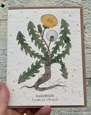 "Dandelion Botanical Greeting Cards - Plantable Seed Paper. These greeting cards feature pen and watercolor drawings. These cards are printed on plantable post-consumer paper, which is embedded with wildflower seeds. To plant the paper, cover it with 1/8"" of soil in full to partial sun and keep moist until the seeds establish. The seeds include Bird's Eye, Clarkia, Black Eyed Susan, Sweet Alyssum, Catchfly and Snapdragon."
