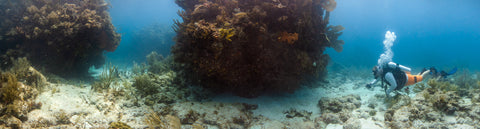 Underwater panorama of North North Dry Rock, Key Largo