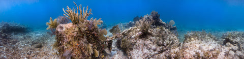 Underwater panorama of Anchor Chain Reef, Elbow Reef, Key Largo