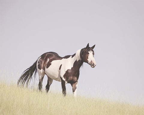Hillside Paint Horse