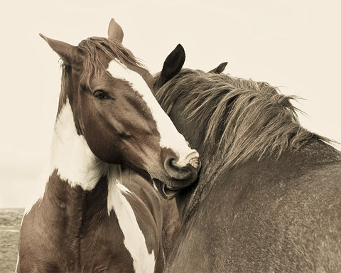 Best Buds, Western Horses