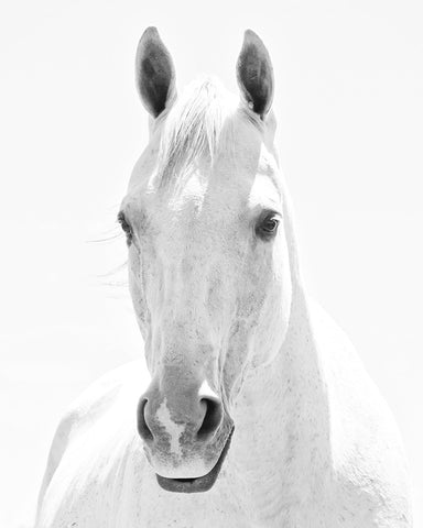 White Horse Portrait | Vertical
