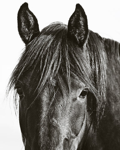 Horses In Black And White Jennifer Meyers Photography