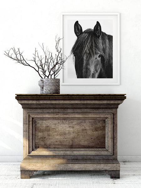 Farmhouse Art, Horse, Black Horse Photograph, Equine Wall Art
