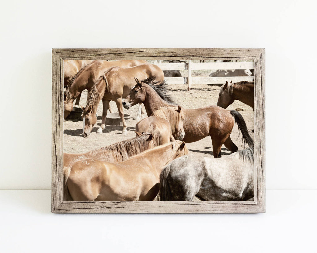 Western Horses Photograph | Ranch Photography | Rodeo Horses Print | Physical Print