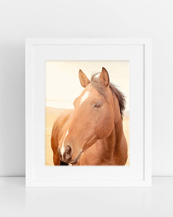 Sunny Art, Horse Picture, Physical Print, Color Horse Photograph