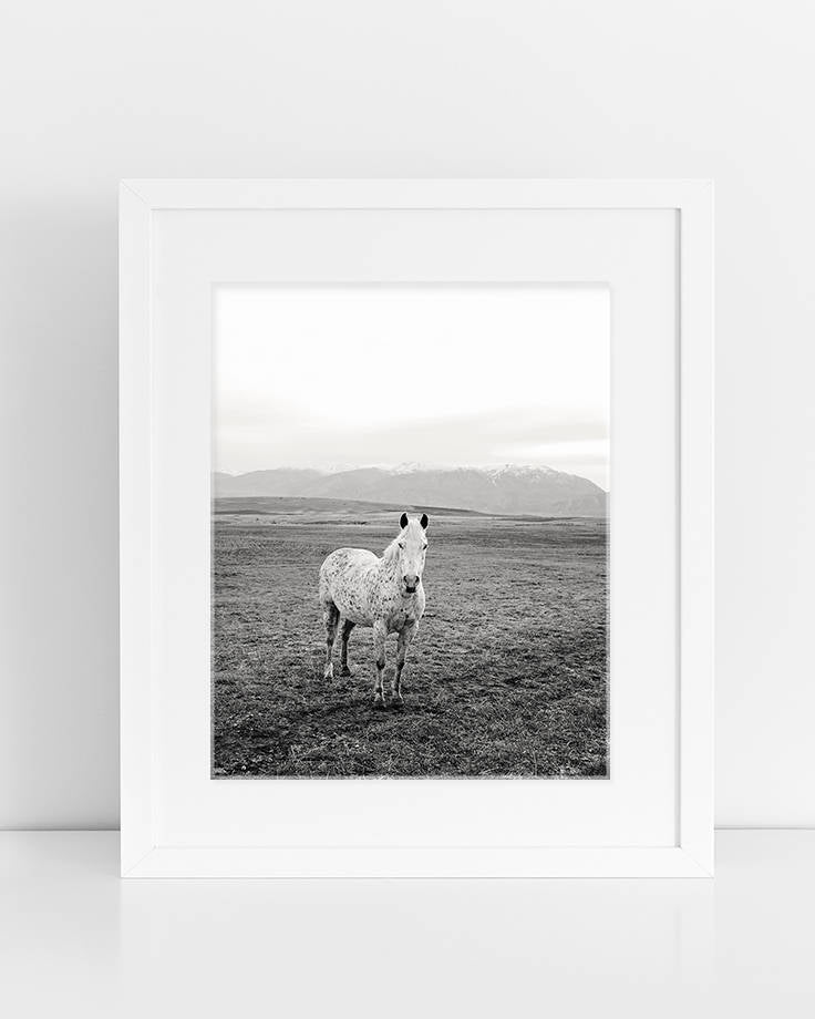 Black and White Western Horse Print, Horse Photography, Physical Print