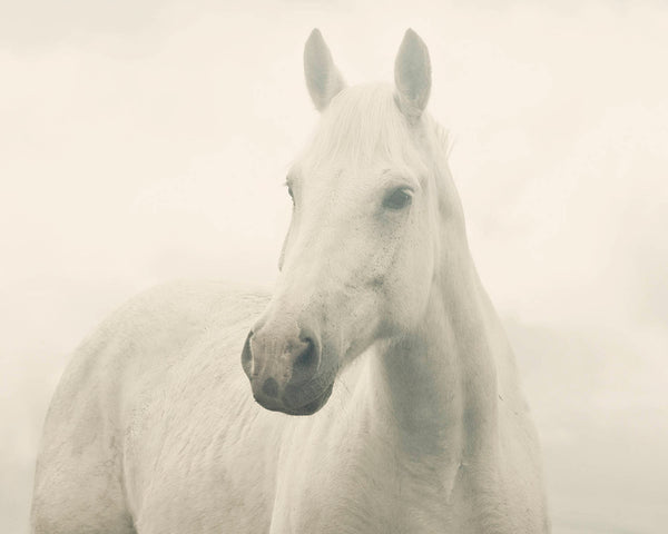Dreamy White Horse Photograph, White Horse in Fog, Equine Print, Physical Print