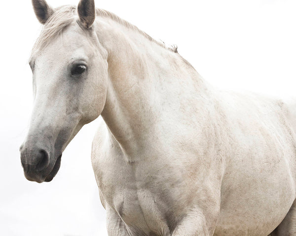White Horse Photo, Monochromatic Photography, White Beauty, Fine Art Equestrian Photography, Physical Print