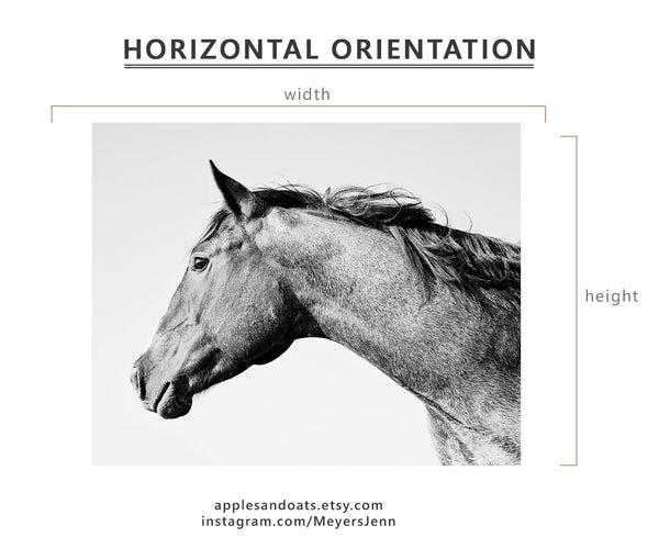 Horse Wall Art, Minimalistic Animal Photography, Black and White Horse Print, Physical Print