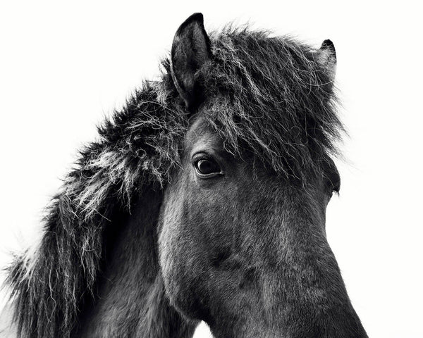 Black Horse Print, Physical Print, Icelandic Horse Wall Art