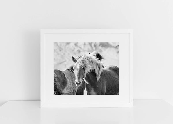 Black and White Horse Photograph, Icelandic Horses, Physical Print
