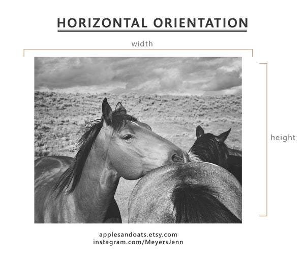 Western Horse Photography in Black and White, Physical Print, Equine Image